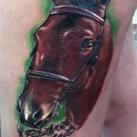 horse_web_jpeg